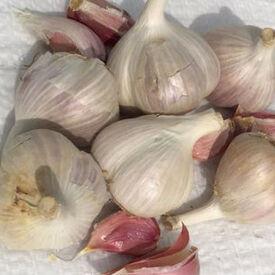 Majestic, Garlic Bulbs