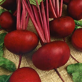 Crosby Egyptian, Organic Beet Seeds