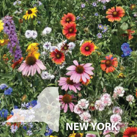 New York Blend, Wildflower Seed - 1 Ounce image number null