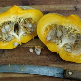 Sweet Meat, Squash Seeds
