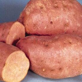 Centennial, Sweet Potato Slips