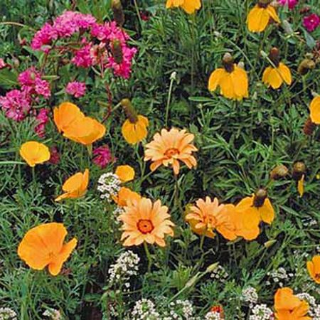 Southwest Blend, Wildflower Seed - 1 Ounce image number null