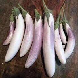 Bride, Eggplant Seeds
