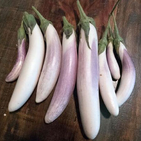 Bride, Eggplant Seeds - Packet image number null