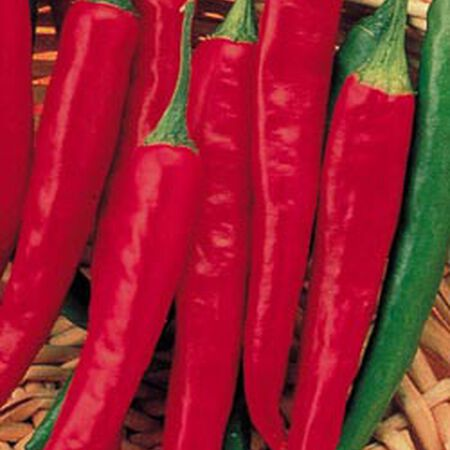 Super Chili, (F1) Pepper Seeds image number null