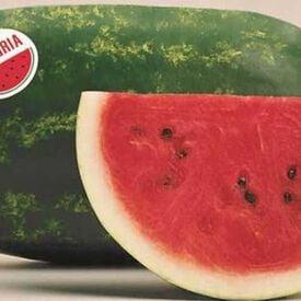 Sangria, (F1) Watermelon Seeds