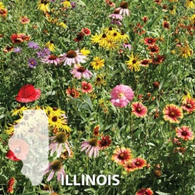 Illinois Blend, Wildflower Seed