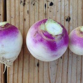 Purple Top White Globe, Turnip Seeds