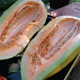 Banana, Melon Seeds