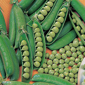 Spring, Pea Seeds