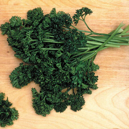 Forest Green, Parsley Seed - Packet image number null