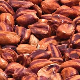 Wild Jungle, Peanut Seeds