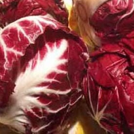 Red Verona Radicchio, Chicory