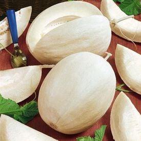 Sakatas Sweet, Melon Seeds