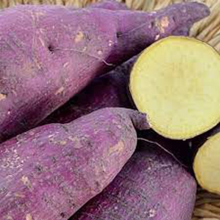 Murasaki Purple, Sweet Potato Slips - 25 Potato Slips image number null