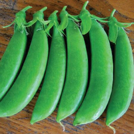 Sugar Snap, Pea Seeds - Packet (1 oz.) image number null