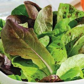 Romaine Trio Blend, Lettuce Seeds