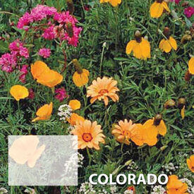 Colorado Blend, Wildflower Seed