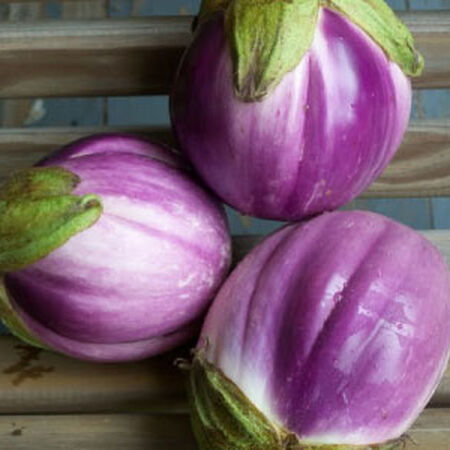 Rosa Bianca, Organic Eggplant Seeds - Packet image number null