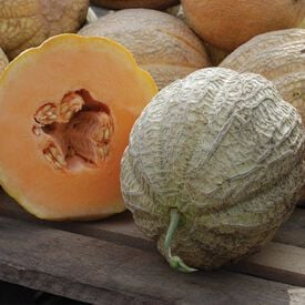 Schoon's Hardshell, Organic Melon Seeds