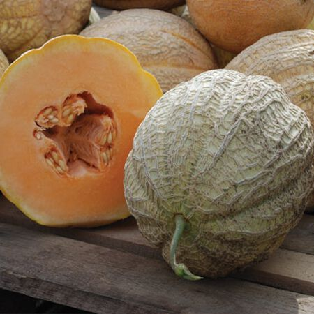 Schoon's Hardshell, Organic Melon Seeds - Packet image number null