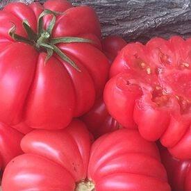 Mushroom Basket, Tomato Seeds