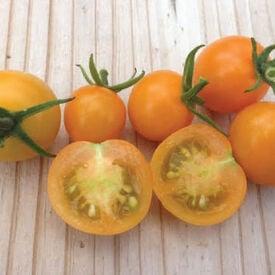 SunSugar, (F1) Tomato Seeds