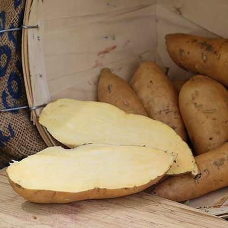 O'Henry, Sweet Potato Slips image number null