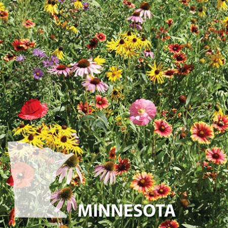 Minnesota Blend, Wildflower Seed - 1 Ounce image number null