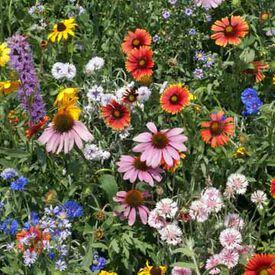 Northeast Value Blend, Wildflower Seed