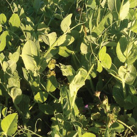 Secada Forage Pea, Legumes - 1 Pound image number null