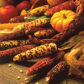 Carousel, Corn Seed