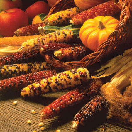 Carousel, Corn Seed - 1/4 Pound image number null