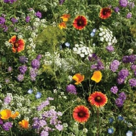 Beneficial Insectary Blend, Wildflower Seed