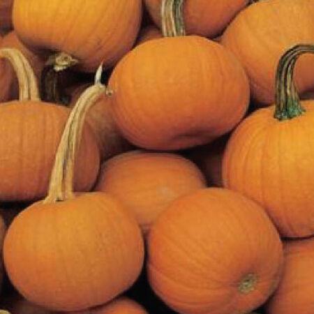 Spookie, Pumpkin Seeds - Packet image number null