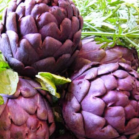 Violet, Artichoke Seeds image number null