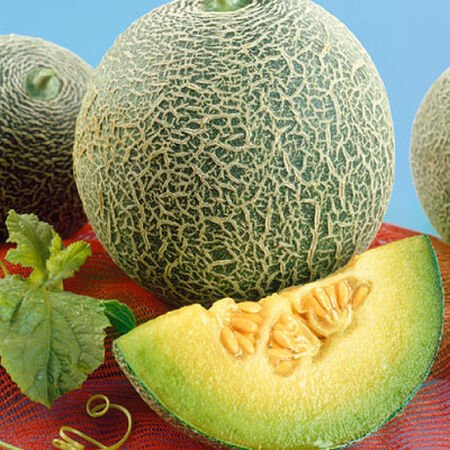 Rocky Ford Green Flesh, Cantaloupe Seeds - Packet image number null