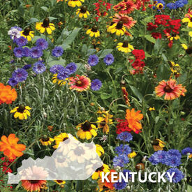 Kentucky Blend, Wildflower Seed