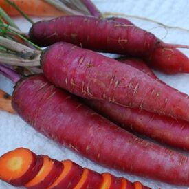 Dragon, Carrot Seeds