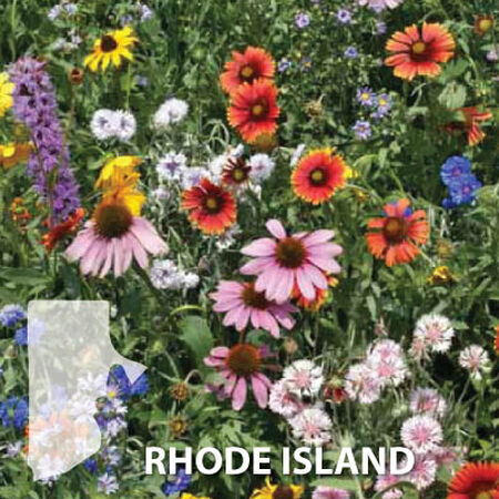 Rhode Island Blend, Wildflower Seed - 1 Ounce image number null