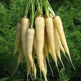 Lunar White, Carrot Seeds