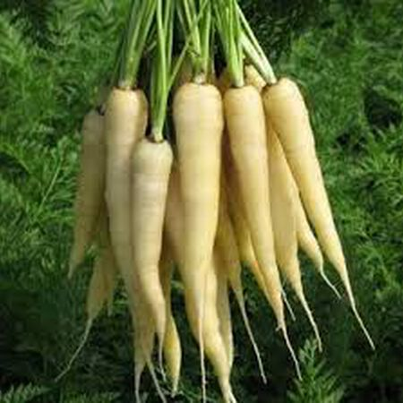 Lunar White, Carrot Seeds - Packet image number null