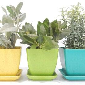 Indoor Herb Kit, Garden Gifts