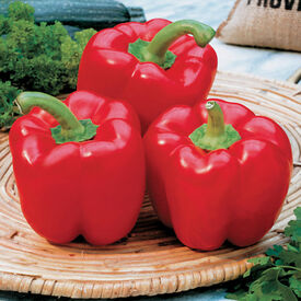 Karma, (F1) Pepper Seeds