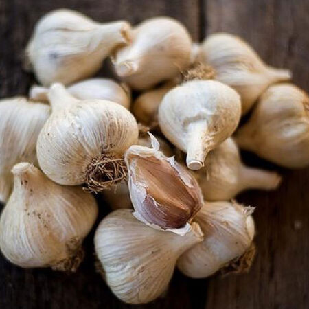 German Extra Hardy, Garlic Bulbs image number null
