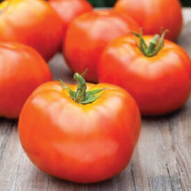 Marion, Tomato Seeds