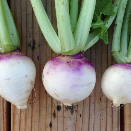 Purple Top White Globe, Turnip Seeds - Packet image number null