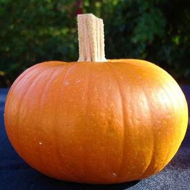 Small Sugar, Pumpkin Seeds