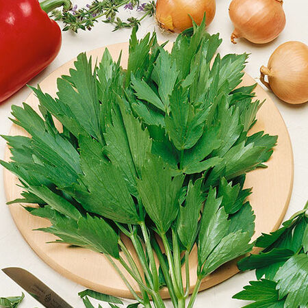 Common, Lovage Seeds - Packet image number null