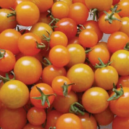 Sun Gold, Tomato Seeds - Packet image number null